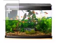 Gorgeous Fish Tank - Love Fish Panorama Tank 64 Litre