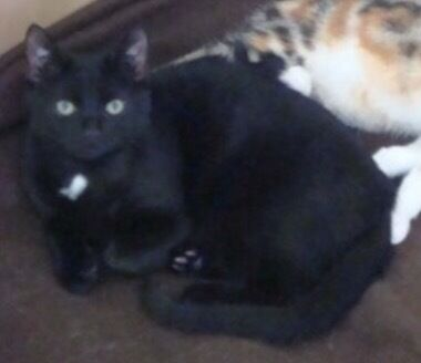 Free Black Epileptic Cat