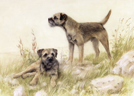 Border Terrier Limited Edition Art Print by UK Artist Gail Tointon*