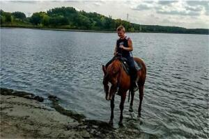 Well Broke Gelding for sale