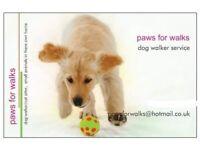 paws for walks dog walker
