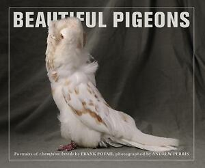 Beautiful-Pigeons-by-Frank-Povah-2012-Paperback
