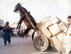 Transport!!n Not free but cheap! only 29.95