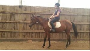 backed 4yr mare