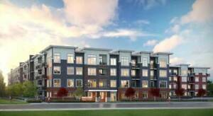 Brand New 3 Bedroom apartments. Available NOW!