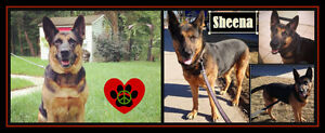 I'M SHEENA, I NEED A COUNTRY FOSTER/FOREVER HOME SOON