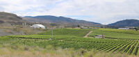 16.34 Acres Producing Vineyard MLS#162305 & #162316