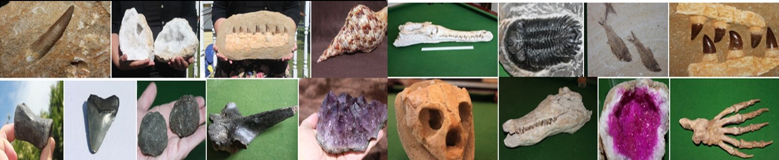 WORLDWIDE FOSSILS DIRECT