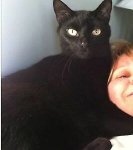 My cat is lost! London Ontario image 1