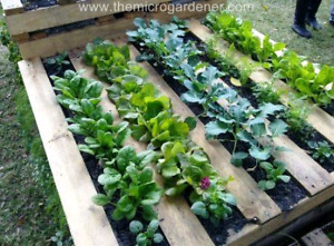 Pallet Planters And Garden Projects