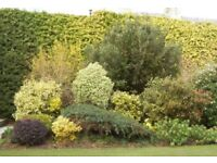 Looking for mature plants or shrubs