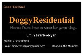 DoggyResidential. Home from Home care for your dogs in the heart of mumbles.