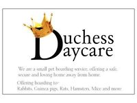 Duchess Daycare- Small pet boarding