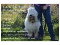Professional Dog Walker in North East Edinburgh with 20% off morning walks special offer!!