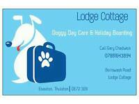 Dog sitter and Holiday Stay