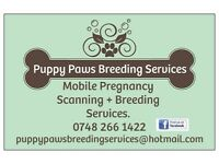 Canine/Feline Pregnancy Scanning, Puppy/Kitten Microchipping, Artificial Insemination & More!