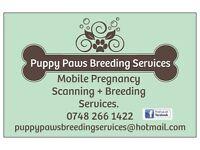 Mobile & Home Dog & Cat Pregnancy Ultrasound Scanning & Other Breeding Services