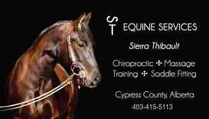 Equine Therapy and Training