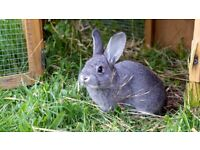 Rabbits/bunnies, different colours, age and sizes