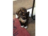 Female kitten looking for forever home
