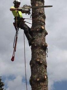 P.C. Tree Service (FULLY INSURED) Kawartha Lakes Peterborough Area image 5