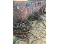 FREE firewood -Cherry tree wood