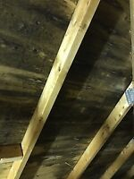 ATTIC MOLD, ASBESTOS,VERMICULITE,ABATEMENT,REMIDIATION AND REST.