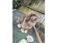Two rabbits free to a good home