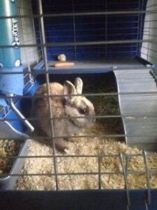 Free Bunny to Good Home