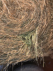 Horse or cow hay