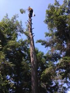 Lumbersmith Tree Removal Services Inc Kitchener / Waterloo Kitchener Area image 2