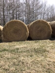 Good Quality Hay, suitable for horses
