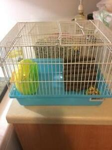 cage et hamster male