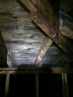 ATTIC MOLD, REMIDIATION AND RESTORATION, MOULD