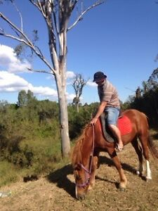 Beautiful Mare for sale North Maclean Logan Area Preview