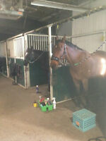 High Country Equestrian Center- Horse Boarding