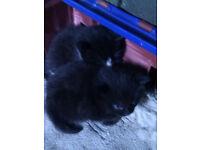 Kittens - Playful