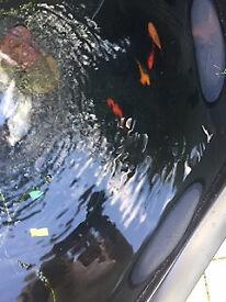 Goldfish x3