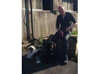 Dog walker Southside Glasgow
