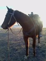 Free 5 year old mare