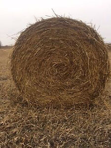 Good quality millet round bales