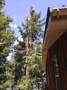 Lumbersmith Tree Removal Services Kitchener / Waterloo Kitchener Area image 2