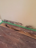 MOULD AT HOME?