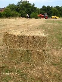 Hay bales (small) for sale