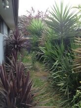 Yukkas and Cordylines Newport Hobsons Bay Area Preview