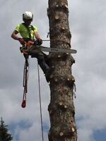 Professional Tree Service (WINTER DISCOUNT)