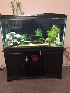 75 Gallon Fish Tank and accessories