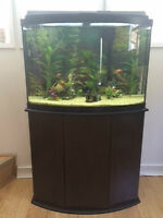 45 Gallon Fish tank with Stand and all accessiories