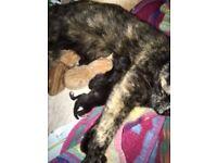 4 Kittens, 2 black, 2 ginger kitten.......