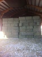 HAY - 2ND CUT - SMALL SQUARES